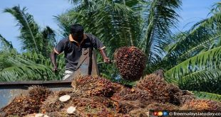 Foreign workers allowed in plantation sector – on case-by-case basis